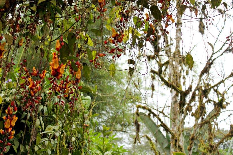Mindo Ecuador una planta hermosa foto de archivo libre de regalías