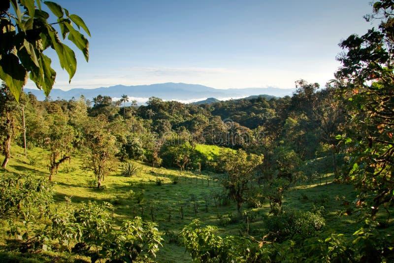 Mindo, Ekwador chmury las fotografia stock