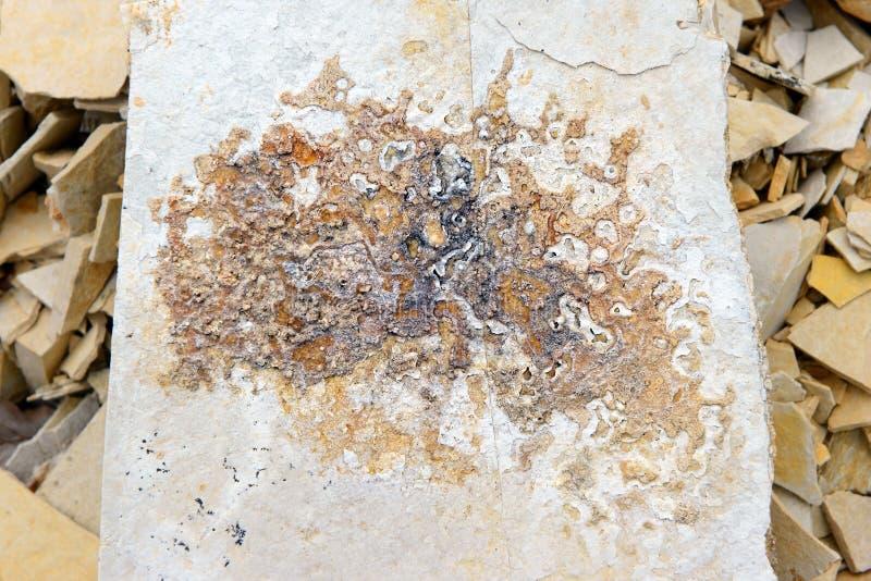 Minerais da dendrite em rochas da pedra calcária de Solnhofen imagens de stock