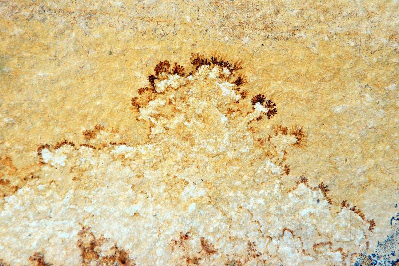 Minerais da dendrite em rochas da pedra calcária de Solnhofen foto de stock royalty free