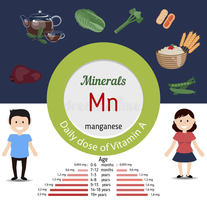 Minerals Mn infographic. Minerals Mn and vector set of minerals Mn rich foods. Healthy lifestyle and diet concept. Manganese. Daily doze of minerals Mn vector illustration