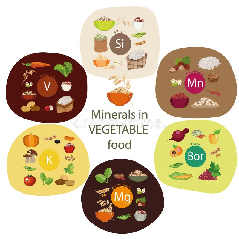 Minerals in plant foods vector illustration