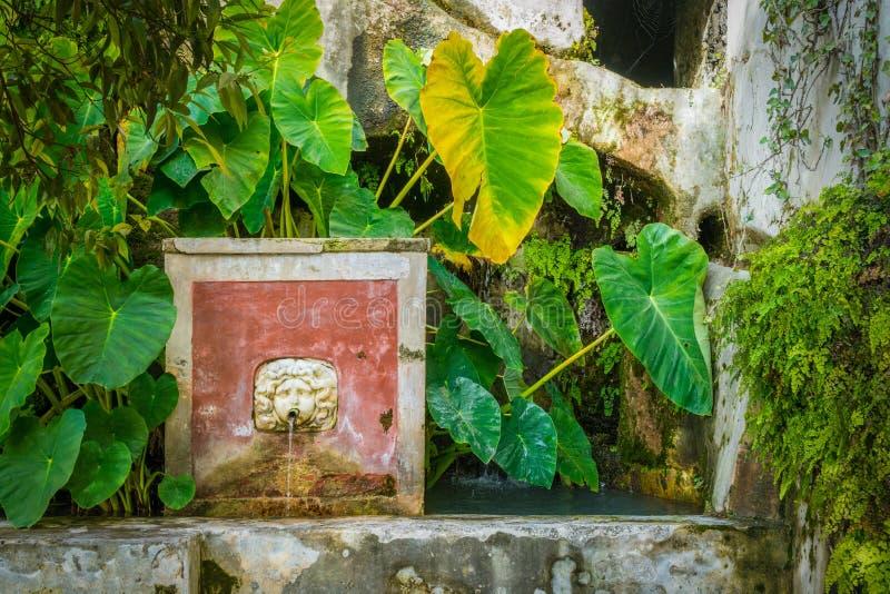 Minerva-` s Garten in Salerno, Kampanien, Italien stockfotos