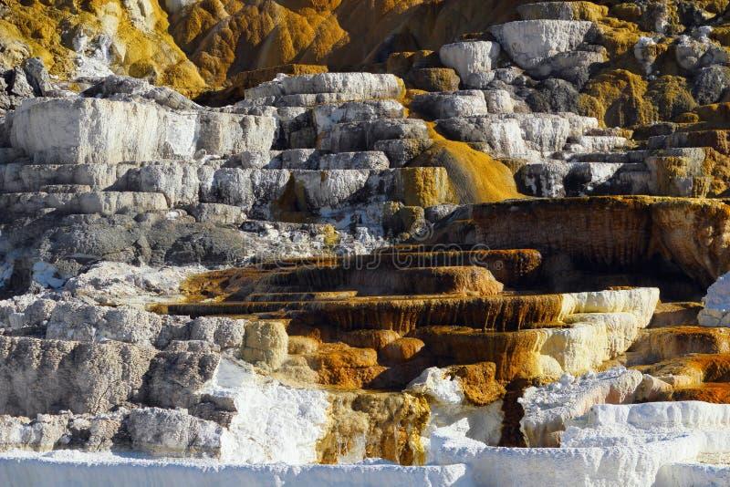 Minerva Terrace Details, parque nacional de Mammoth Hot Springs, Yellowstone, Wyoming imagen de archivo