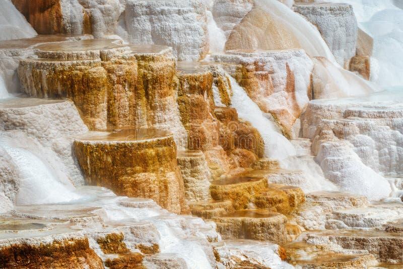 Minerva Terrace em Mammoth Hot Springs, no Parque Nacional de Yellowstone fotografia de stock royalty free