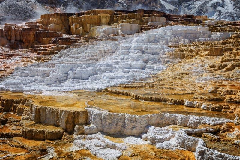 Minerva Terrace em Mammoth Hot Springs, no Parque Nacional de Yellowstone imagens de stock royalty free