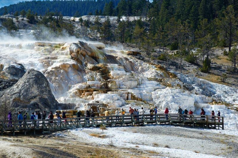 Minerva Terrace, Mammoth Hot Springs imagens de stock