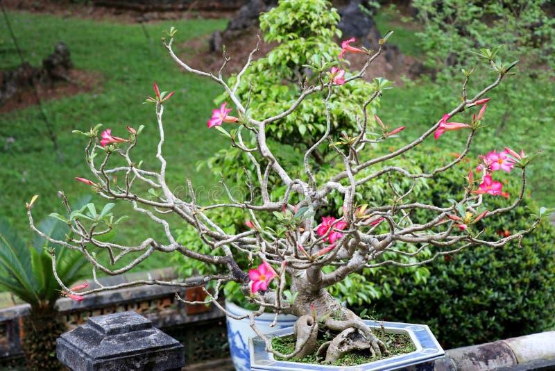 Minh Mang Royal Tomb Hue - Vietnam Asia. Minh Mang Royal Tomb Hue a beautiful place - Vietnam Asia royalty free stock photos