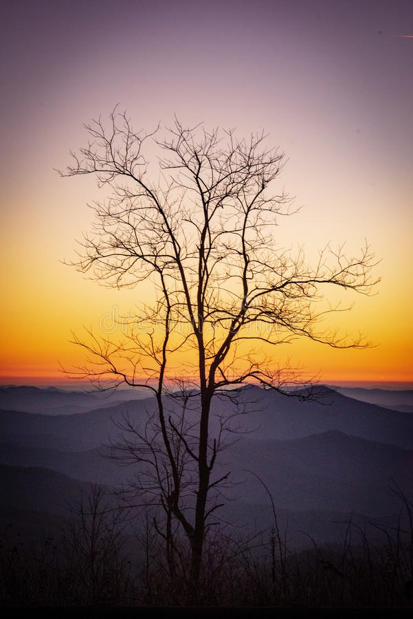 Minha árvore de Cherohala foto de stock
