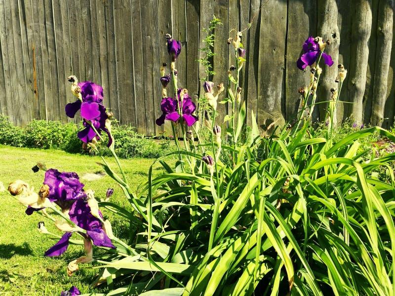 Minha flor fotos de stock royalty free