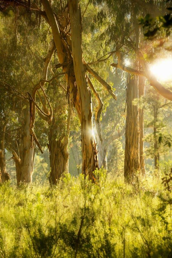 Minha floresta imagens de stock