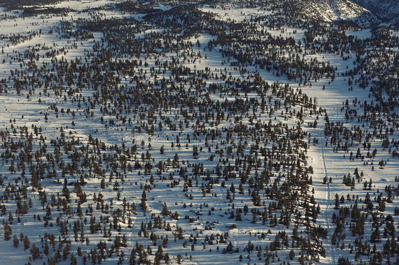 Mini árboles foto de archivo