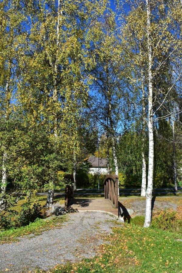 Mini arbres bruns de pont et de bouleau image stock