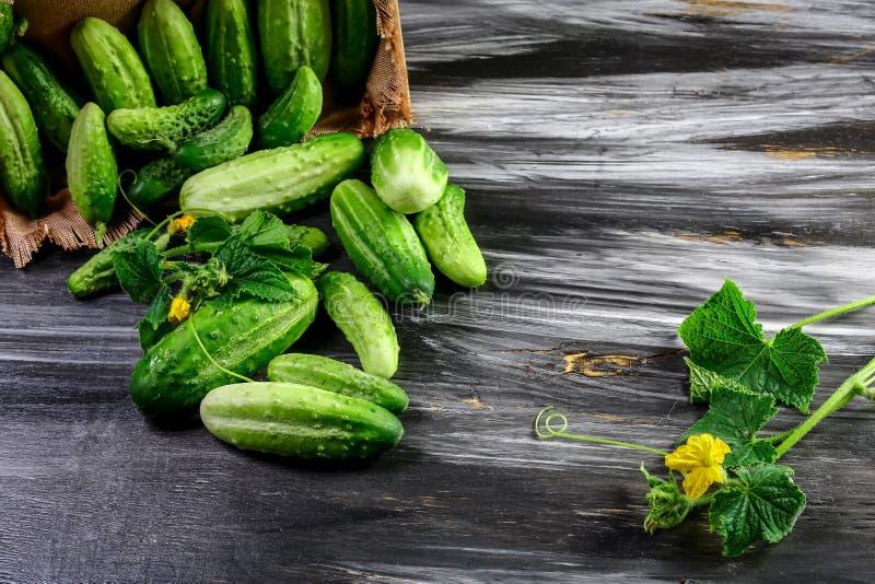Mini Baby Cucumbers Ready orgânico cru a comer imagens de stock