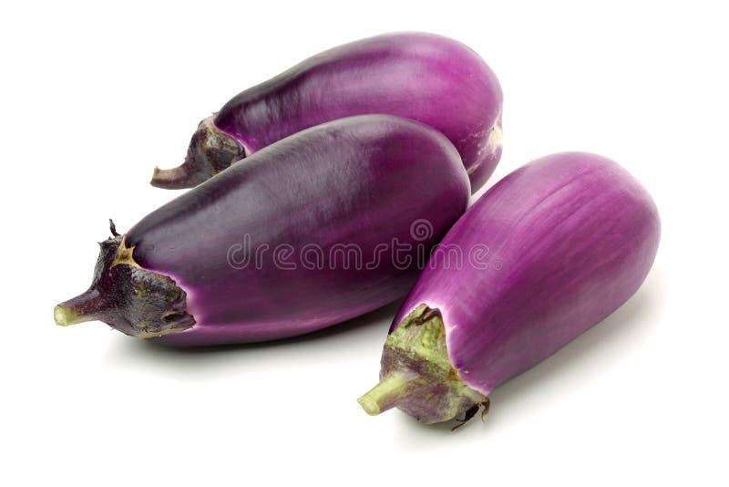 Mini Baby Eggplant stock fotografie