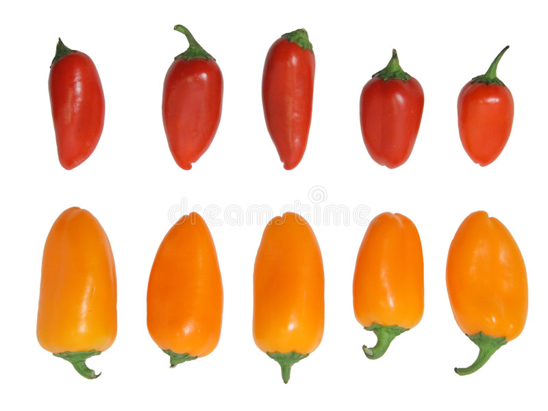 Download Mini bell peppers isolated stock photo. Image of mini - 3597314
