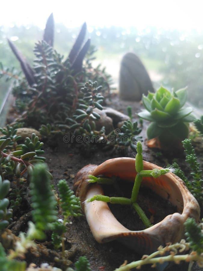Mini- blommaträdgård arkivfoto