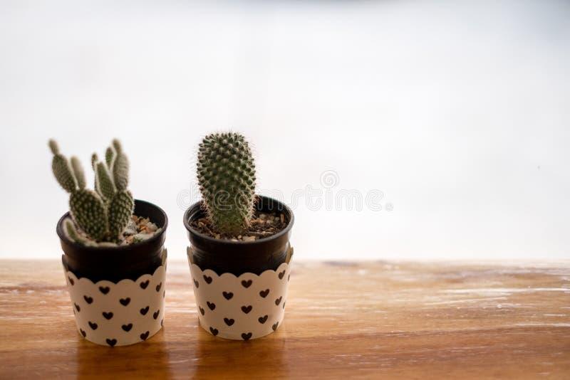 Mini Cactus i vas med mini- hjärta fotografering för bildbyråer