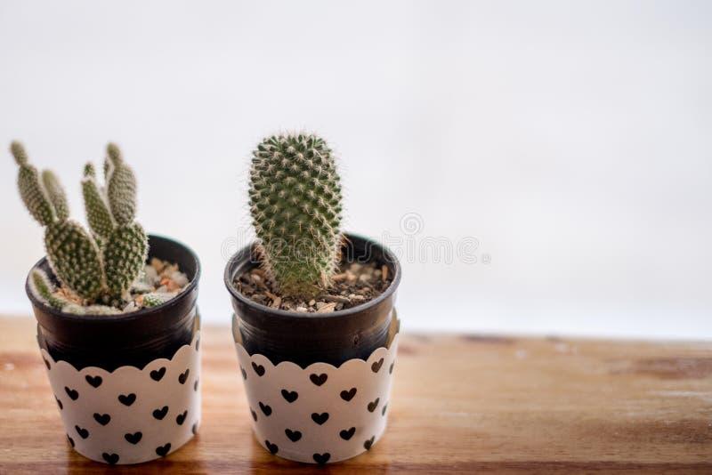 Mini Cactus i vas med mini- hjärta arkivfoton