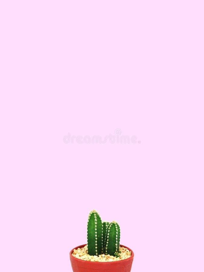 Mini Cactus-installatie op rode potten Roze pastelkleur royalty-vrije stock afbeeldingen