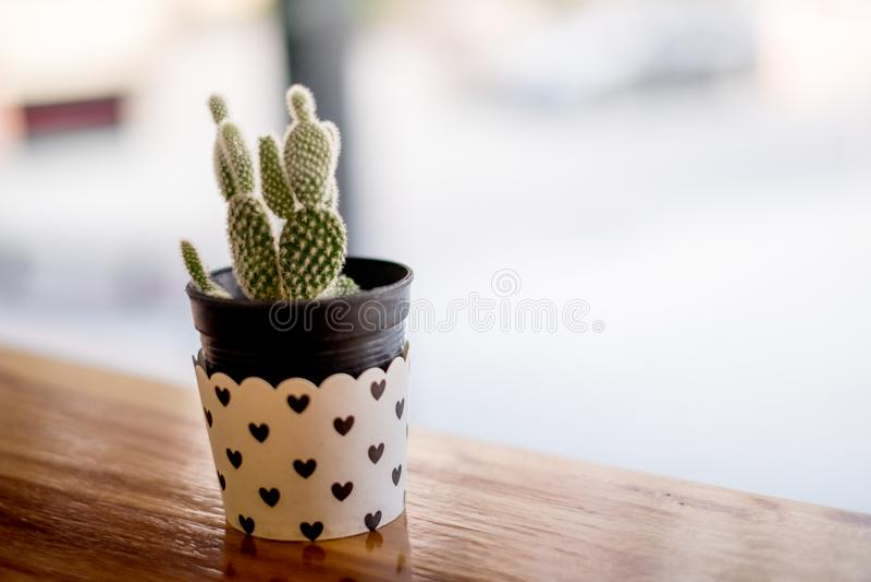 Mini Cactus no vaso com mini coração fotografia de stock royalty free