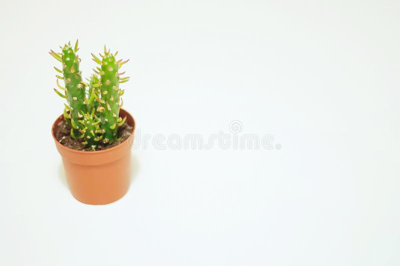 Mini Cactus in a Orange Vase White Background stock image