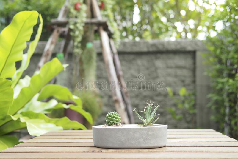 Mini cactus in stone pot with lath table. stock photos