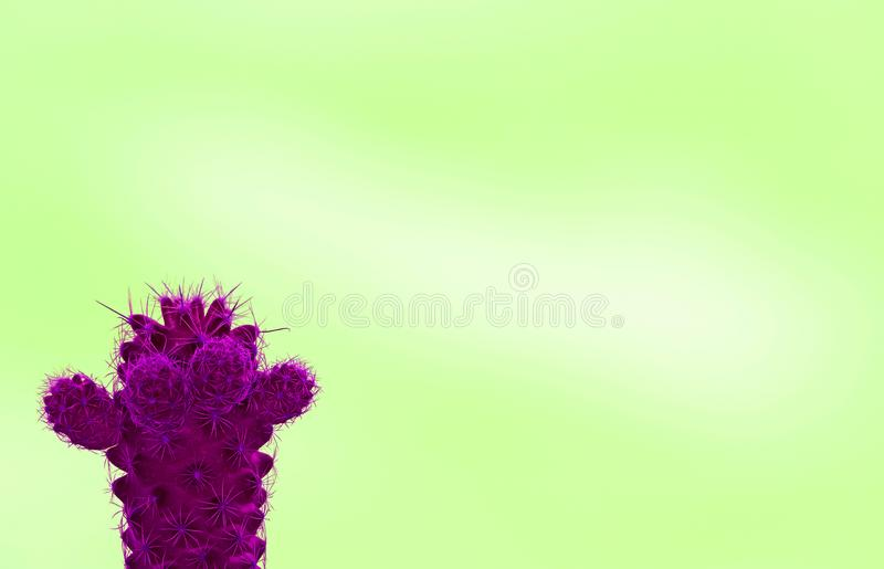 Mini cactus in surreal styled vivid magenta isolated on lime green background with free space. For text and design, amazing, art, artistic, beautiful, beauty stock image