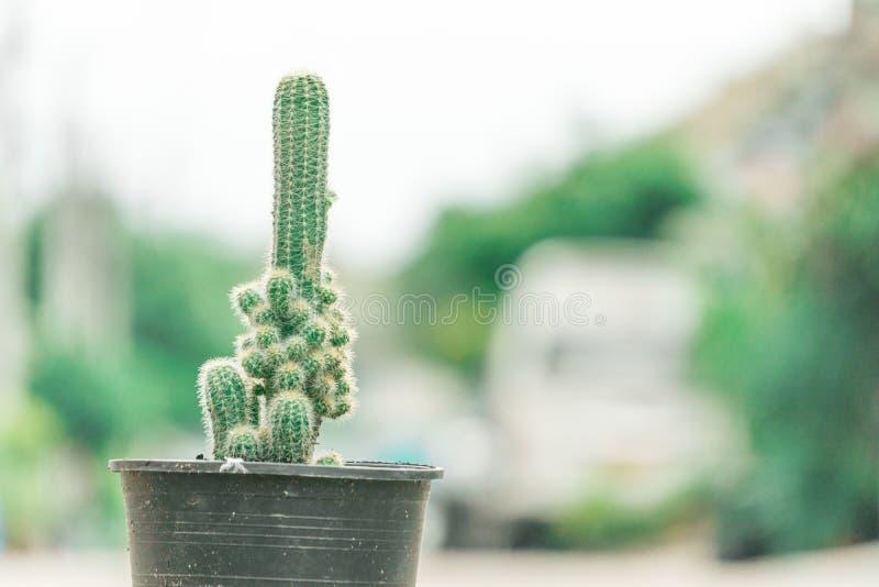 Mini Cactus växt på krukan på kaktuslantgården eller den lilla nippelkaktuns med suddig bakgrund arkivfoton