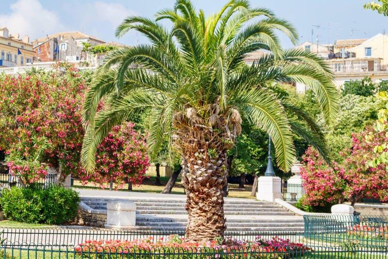 Mini drzewko palmowe w parku Grecja zdjęcia stock