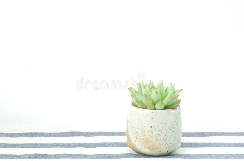 Mini Echeveria Succulent Flowering Plants Ceramic Pot stock photo