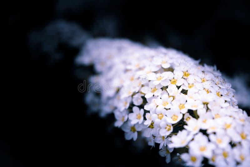 Mini fleurs photographie stock