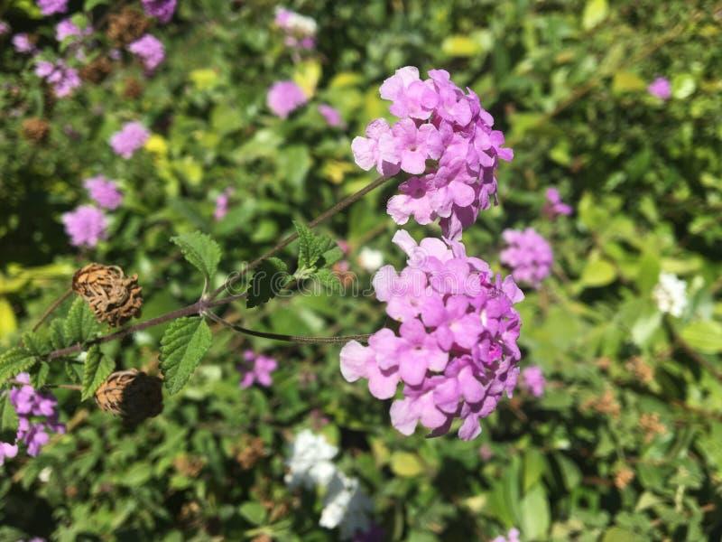 Mini flores imagen de archivo