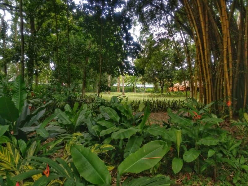 Mini floresta com bambu e plantas imagem de stock royalty free