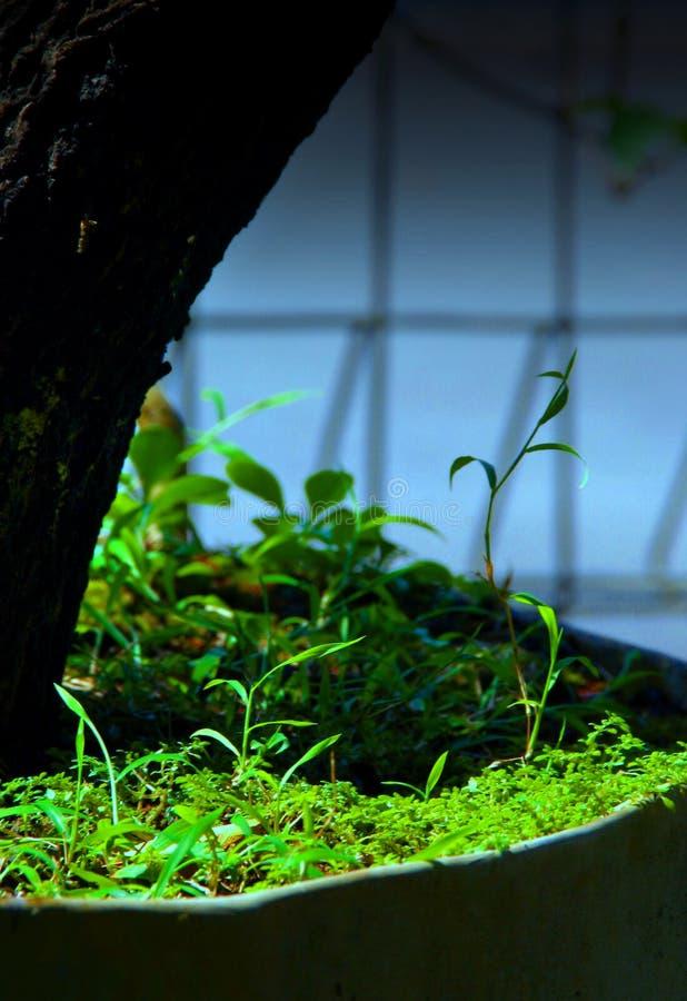 Mini forêt photographie stock