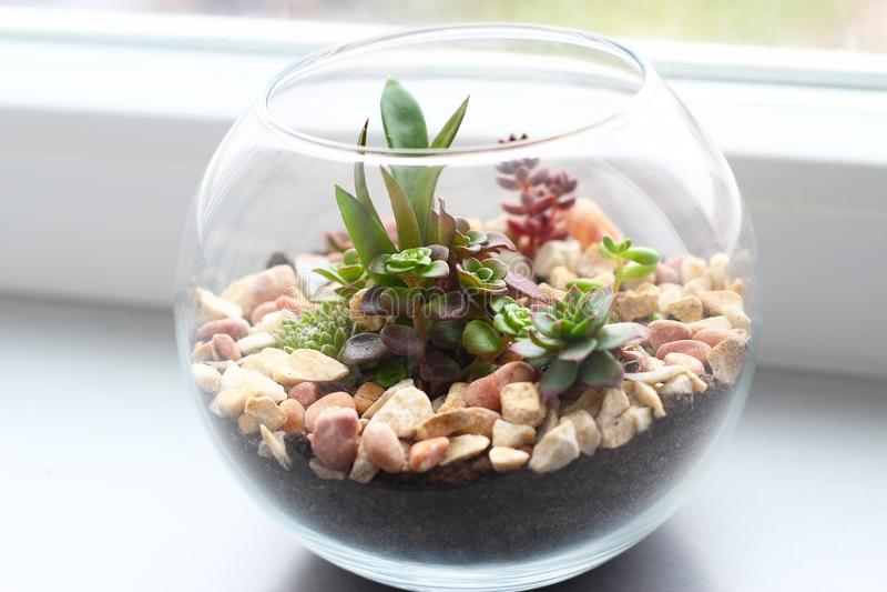 Mini giardino in vaso di vetro fotografia stock libera da diritti