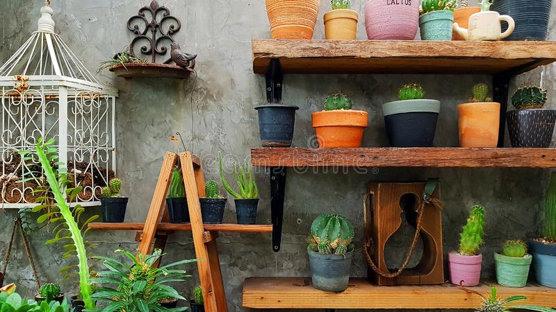 Mini indoor garden Area decoration with Nature tone concept with wooden shelf to present potted cactus. In garden shop royalty free stock photography