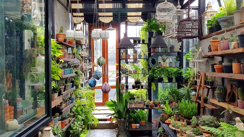 Mini indoor garden Area decoration with Nature tone concept with wooden shelf to present potted cactus. In garden shop stock image