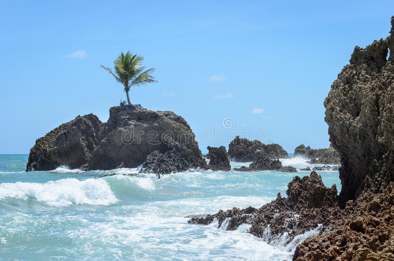 Mini island with a single coconut tree surrounded by sea water and some rock formations in a paradisiacal scenery, very beautiful. Day. Sea water hitting the royalty free stock images