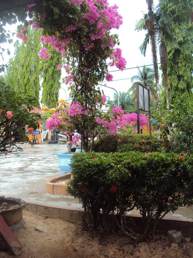 Mini jardín interior en día de verano caliente foto de archivo