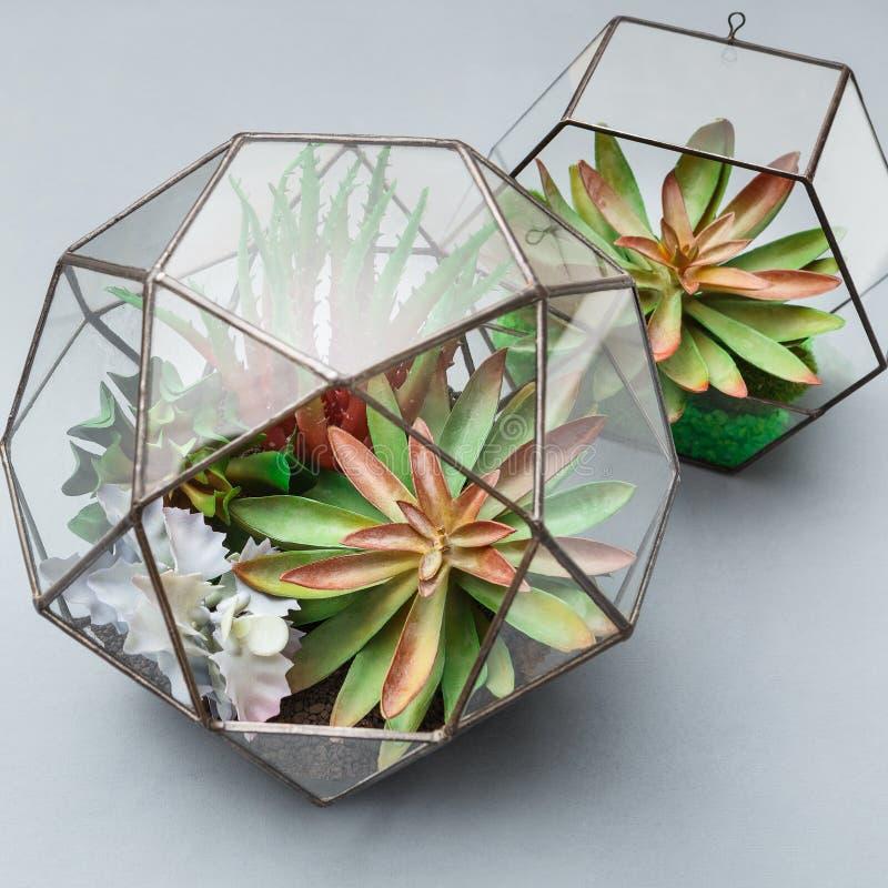 Mini jardim em dois florariums geométricos de vidro fotografia de stock