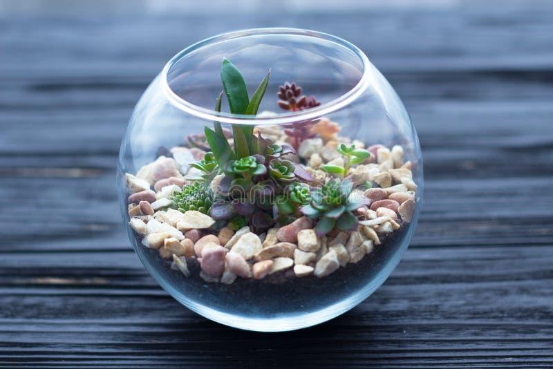 Mini jardim no vaso de vidro no fundo de madeira fotos de stock