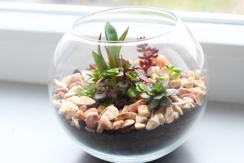 Mini jardin dans le vase en verre photo libre de droits