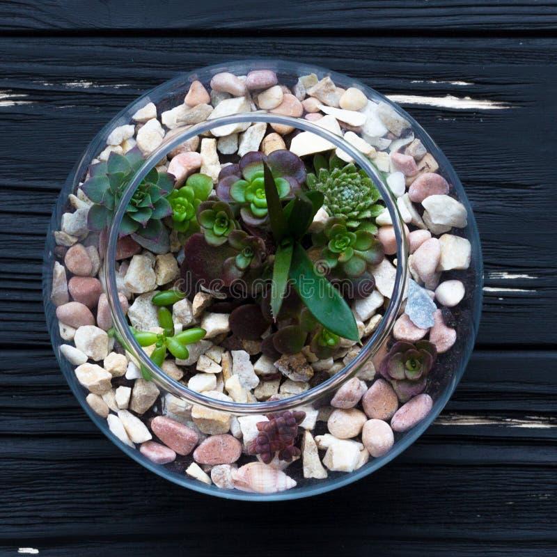 Mini jardin dans le vase en verre photo stock