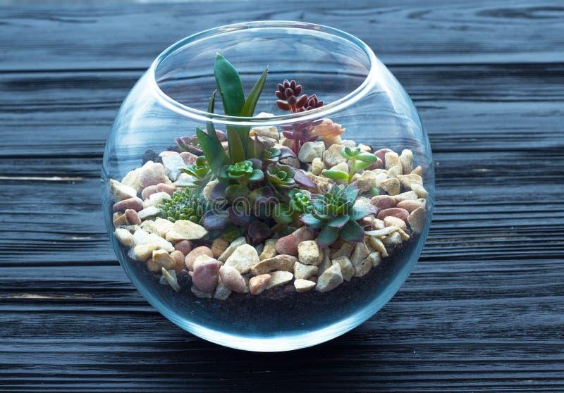 Mini jardin dans le vase en verre sur le fond en bois photographie stock