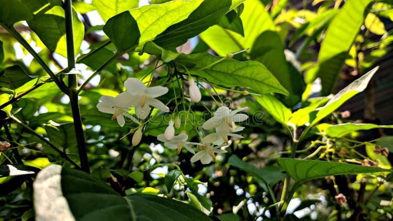 Mini kwiat obrazy stock