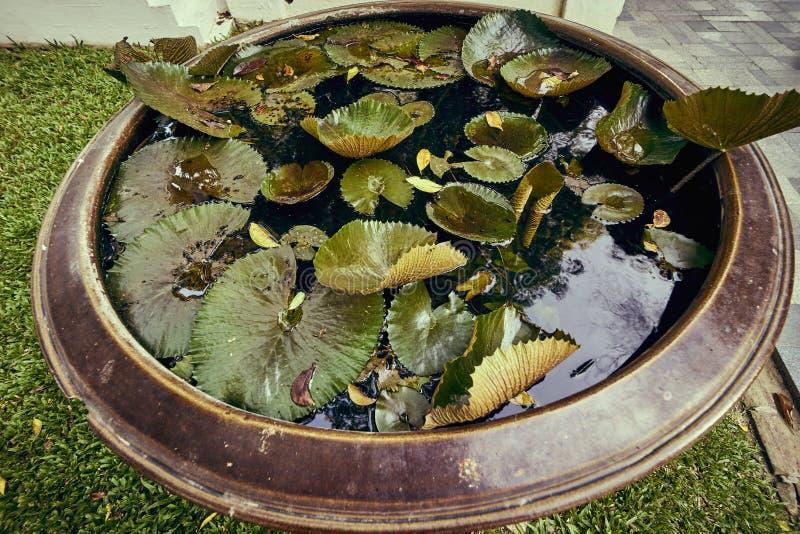 Mini lagoa do bassin imagens de stock