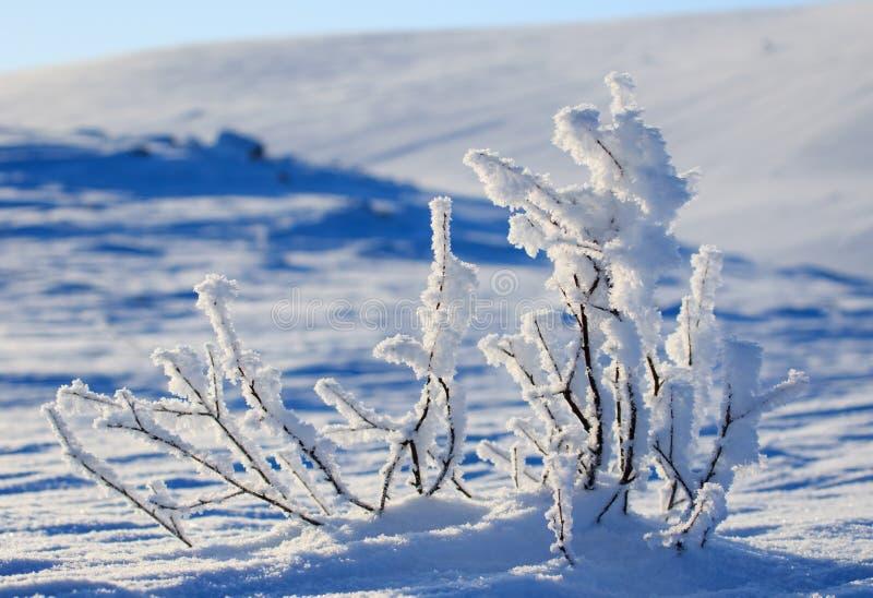 Mini macro d'hiver de la neige, neige blanche avec l'effet d'ombre bleu, paysage de belle vue Au nord de la Russie pendant le tem photographie stock libre de droits