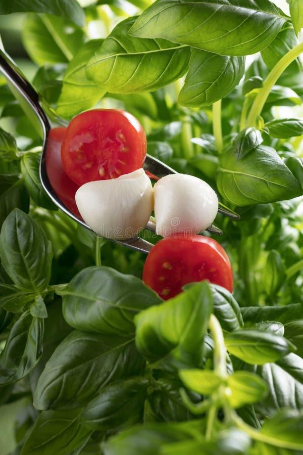 Mini mozzarella cheese, tomatoes and green basil royalty free stock photo