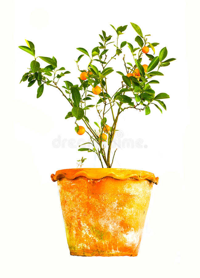 Mini naranja foto de archivo